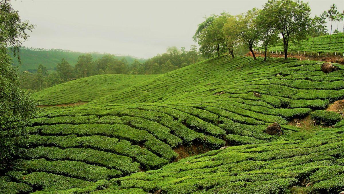 The Hill Station of Kerala – Munnar